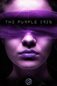 The Purple Iris
